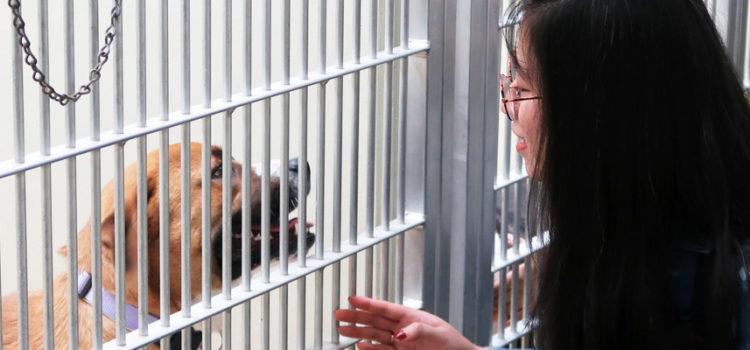 Career Day at Oregon Humane Society
